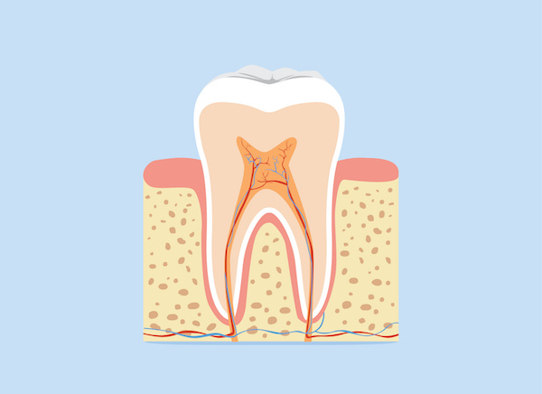 Can You Name The Parts Of The Tooth
